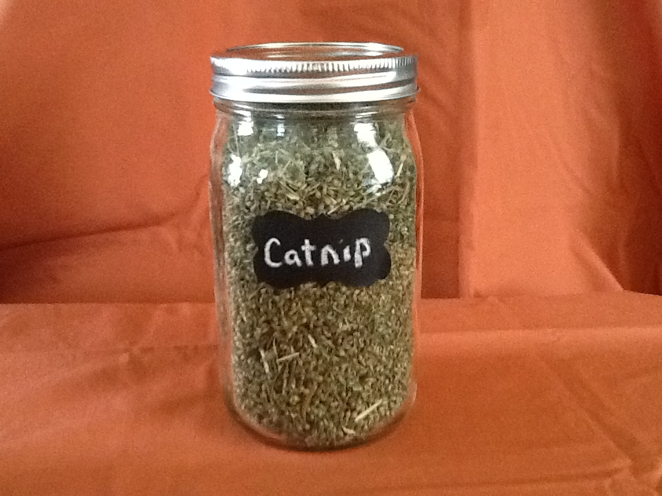 Catnip-Jar.JPG