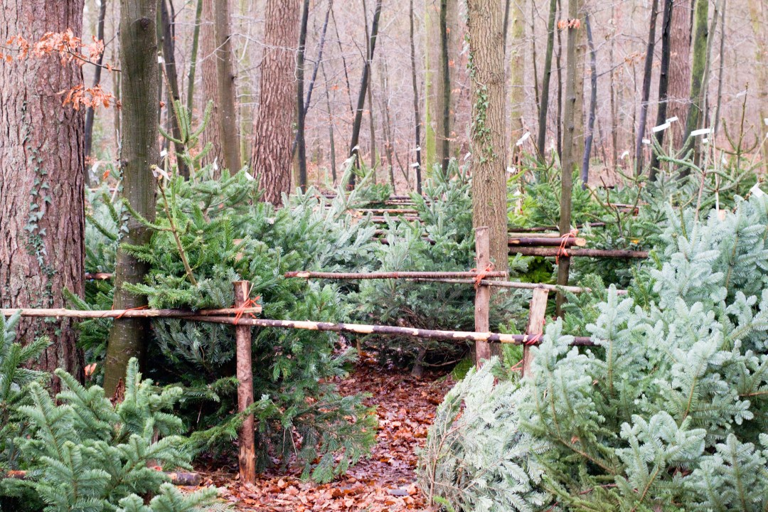 Christmas Trees - The Project Lifestyle