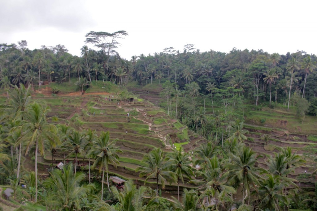 Bali, Indonesia - The Project lifestyle