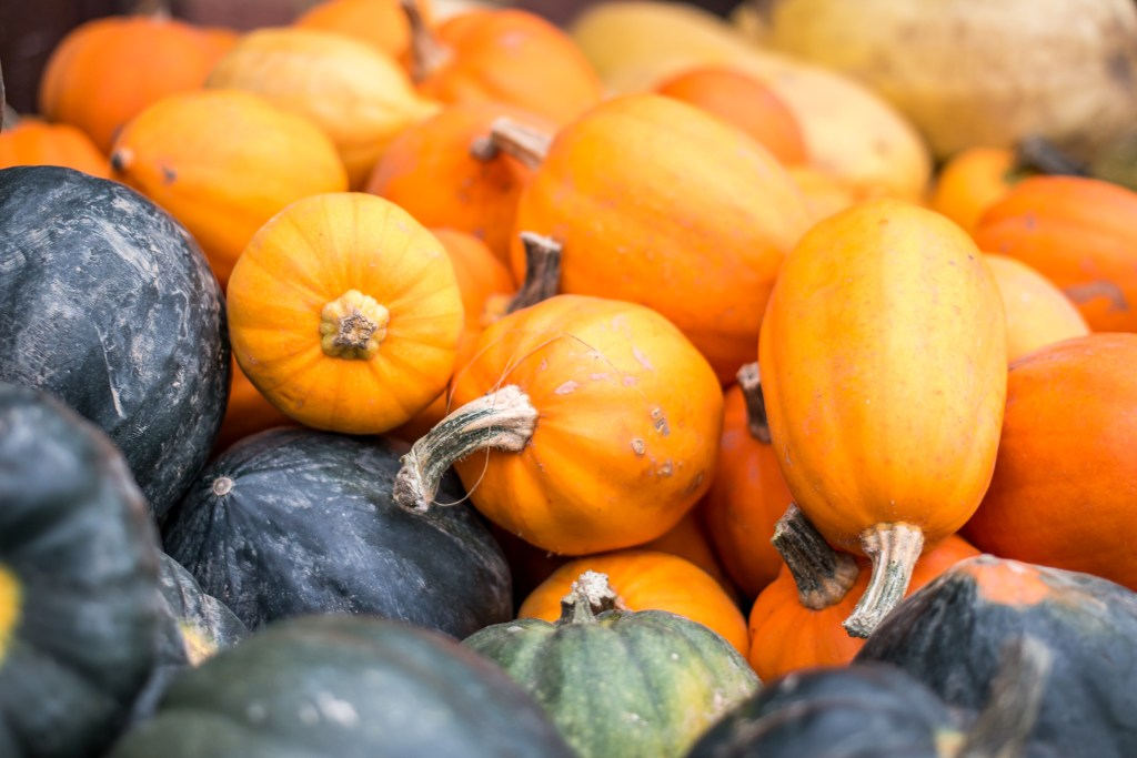 Pumpkin picking at Pickwell Farm - The Project Lifestyle