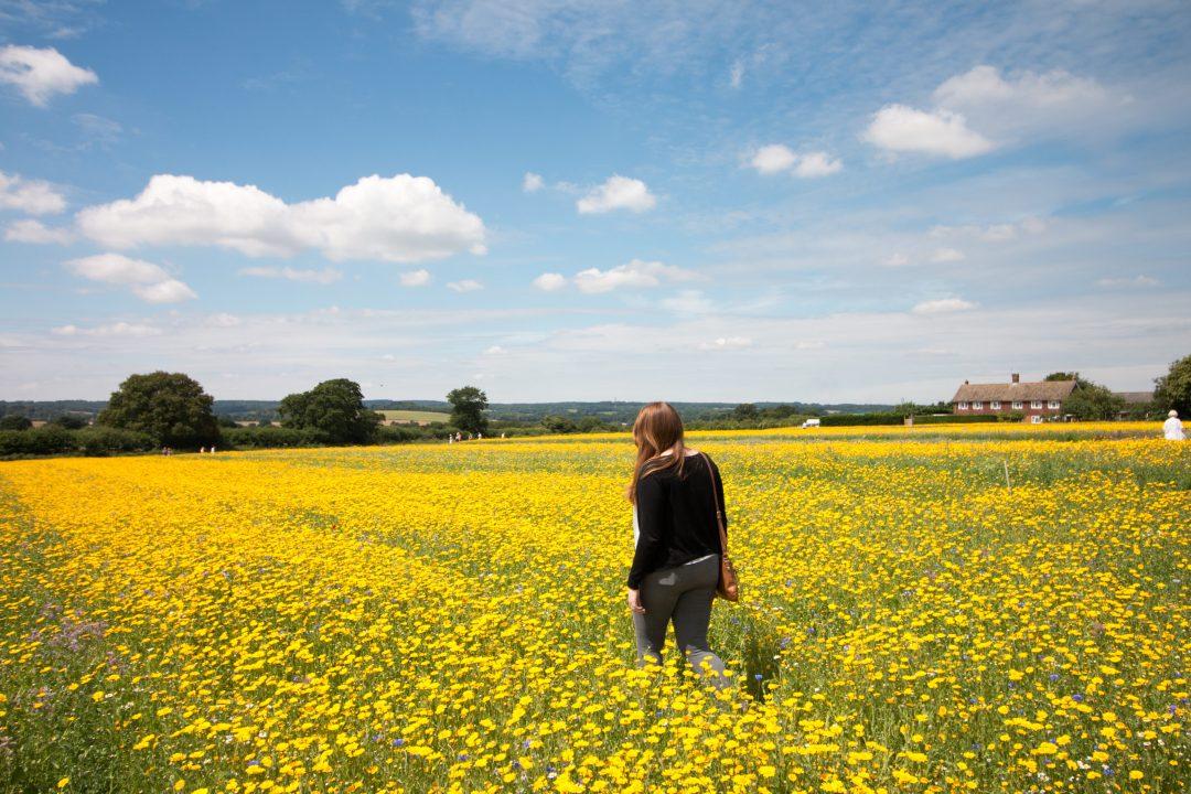 Alton Lavender Fields, Hampshire - The Project Lifestyle