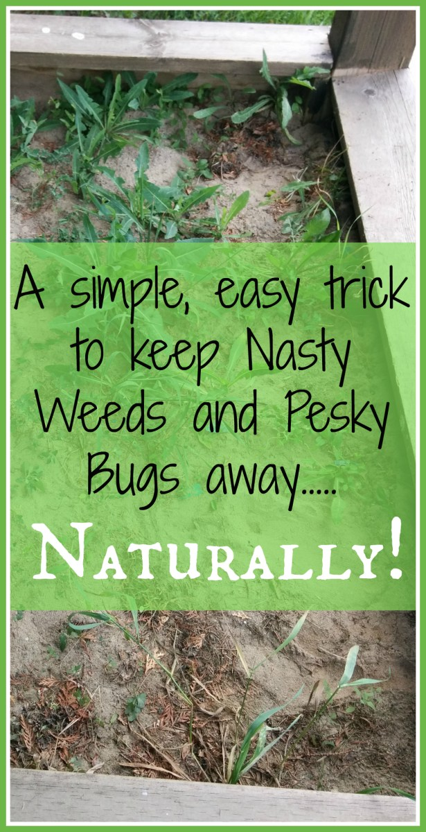 How To: Naturally Destroy Nasty Weeds & Pesky Bugs!