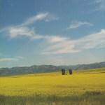 I went to Idaho & had a Cronut