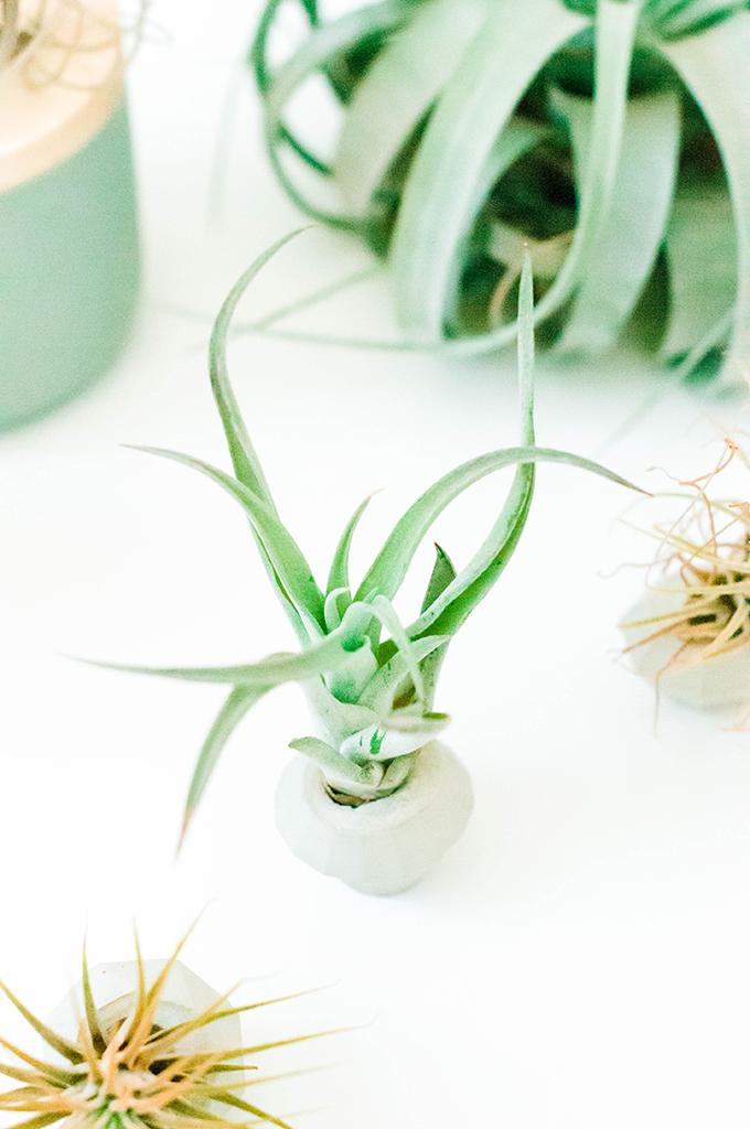 DIY Concrete Gem Mini Planters | www.theproperblog.com