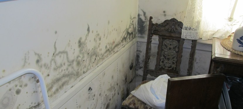 Mold, Is It Dangerous?