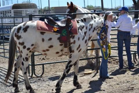 Blue Rose Horse Rescue (2)