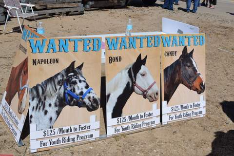 Blue Rose Horse Rescue (5)