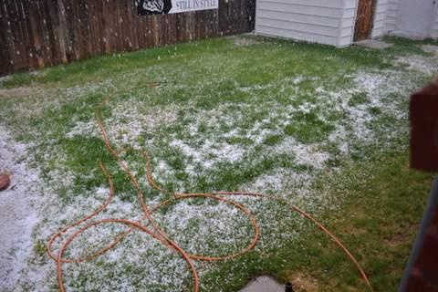 Spring Hail (1)