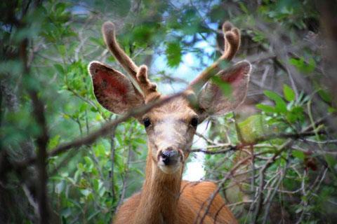 Courtesy Photo - Colorado Parks & Wildlife