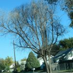 City of Lamar Eligible for Tree Replacement Funding