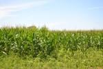 Colo. Corn Administrative Committee Nominates New Board Members