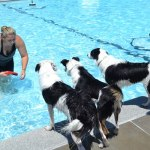Annual Dog Day at Lamar Pool