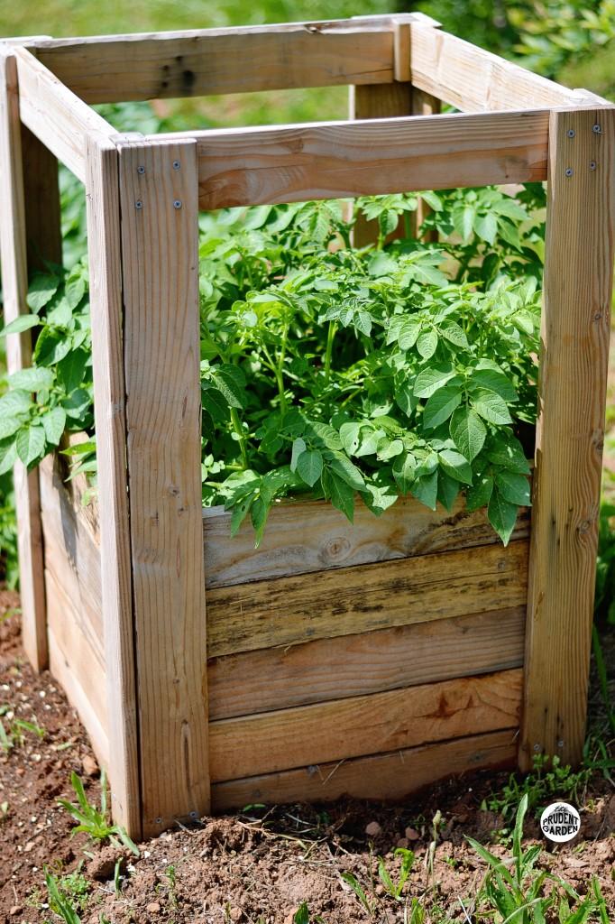vertical gardening, potato box