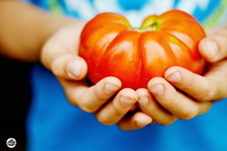 Tips on Growing Great Tomatoes