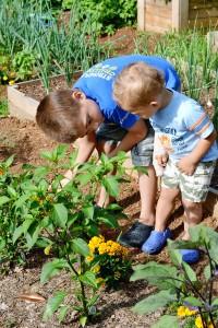 Original_Photog-Debbie-Wolfe-kids-into-gardening_s4x6