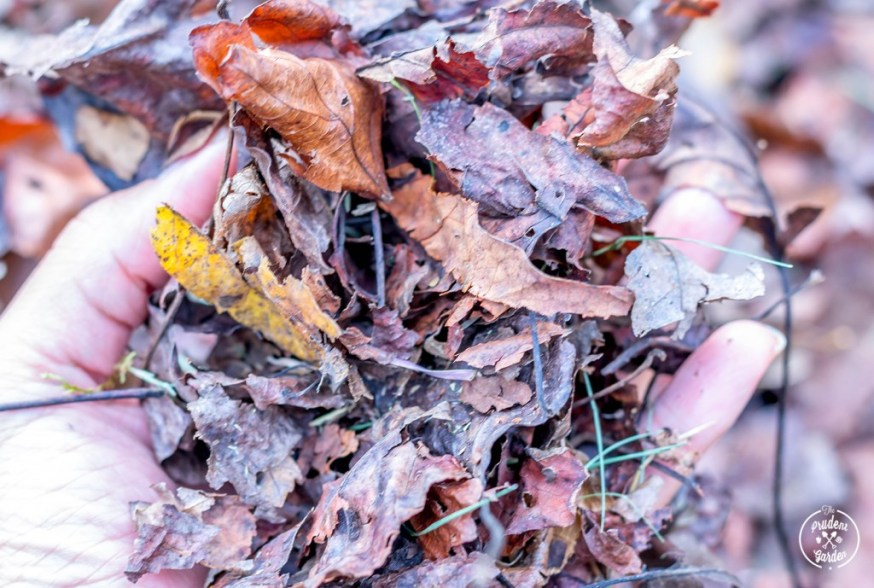 Compost Leaves For Great Soil