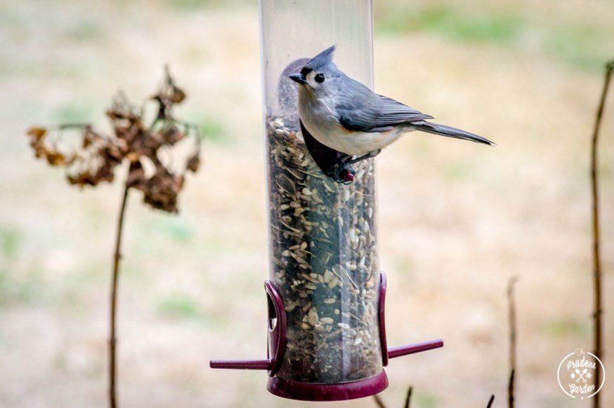 Backyard Birding: Get Started!
