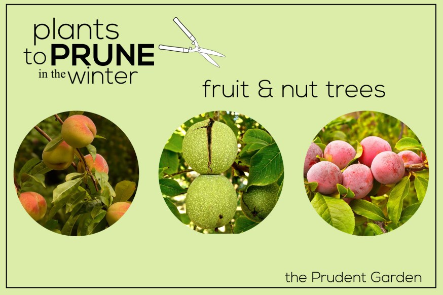 Plants to Prune in the Winter