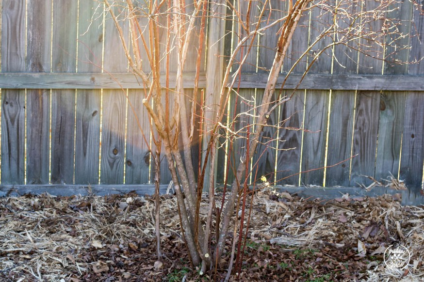 Why You Should Prune Blueberries Bushes