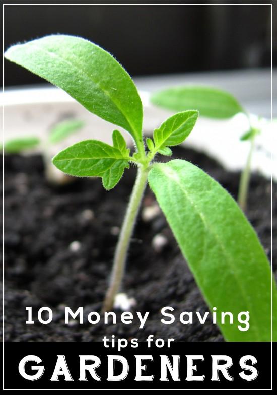 10 Money Saving Tips For Gardeners
