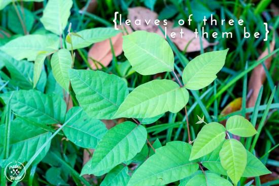 Poison Ivy |Identification Eradication and Treatment