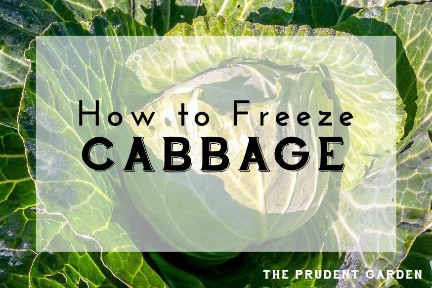 How to Freeze Cabbage