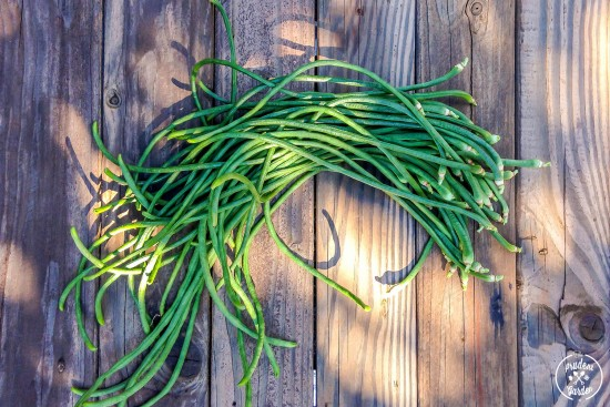 Growing Yard Long Beans| Soy Glazed Long Beans Recipe