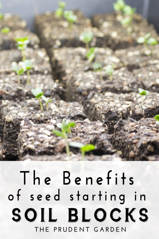 The Benefits Of Seed Starting In Soil Blocks