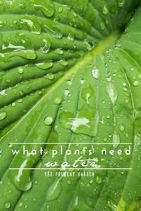 What Plants Need: Water