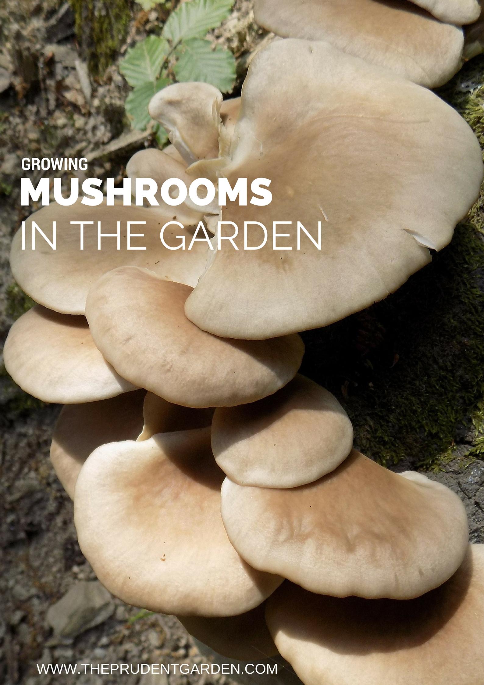 Growing Mushrooms In The Garden