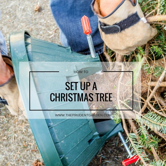 Pick the perfect tree with the help of our Christmas Tree Care guide. Learn how to keep your tree looking fresh until the big day.