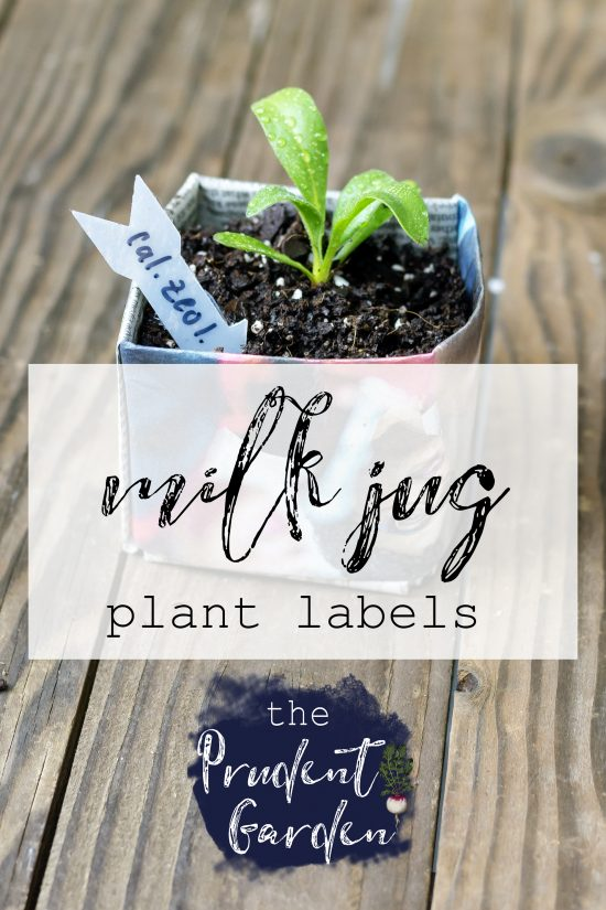 Upcycle an old milk jug into useful plant labels for new seedlings. Milk jug plant labels are the perfect size to help keep your seedling organized.