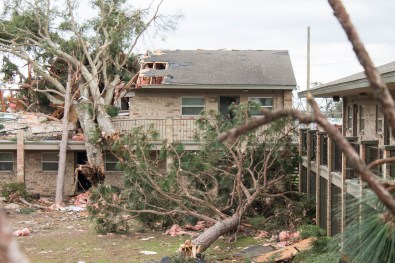 At least four large trees were uprooted near the Moorings apartment complex in Pensacola. (Derek Cosson/The Pulse)