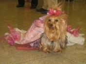 Puppy Prom 031