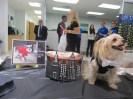 NY Pet Fashion Show 036