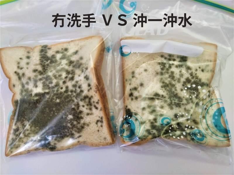 麵包種菌測試,沒有洗手與隨便洗一洗手的比較