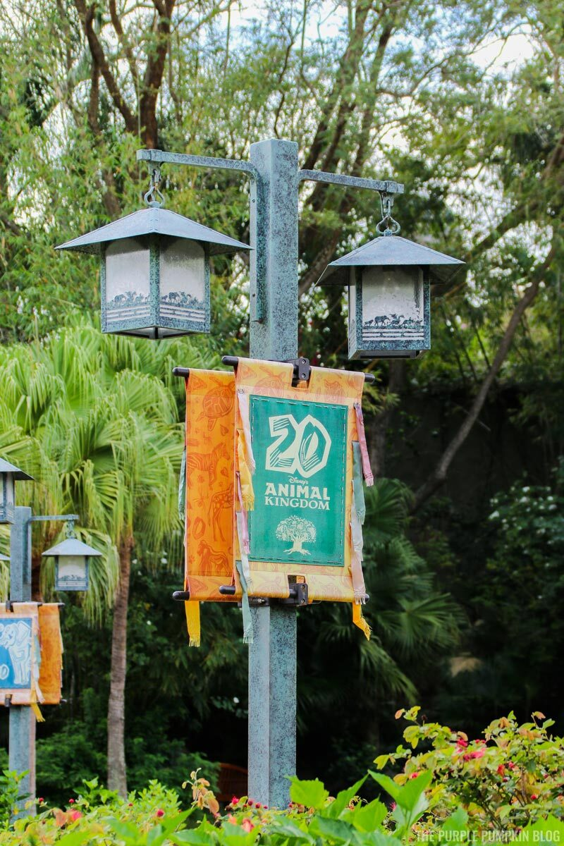 Animal Kingdom 20 Years