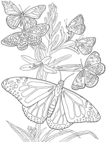 30+ totally awesome Free Adult Coloring Pages ⋆ The Quiet Grove