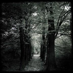 nel bosco (1 di 6)