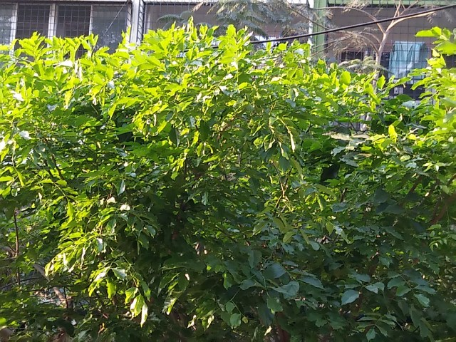 Sunlight through plants