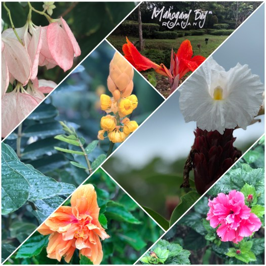 Tropical Dreaming with Beautiful Tropical Flowers of Roatan