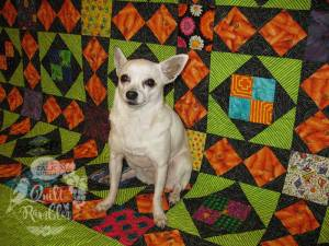 White Chihuahua on a colorful quilt