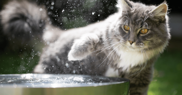 cat water bowls that won't tip over