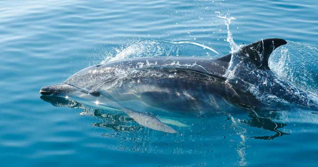 black dolphin in body of water