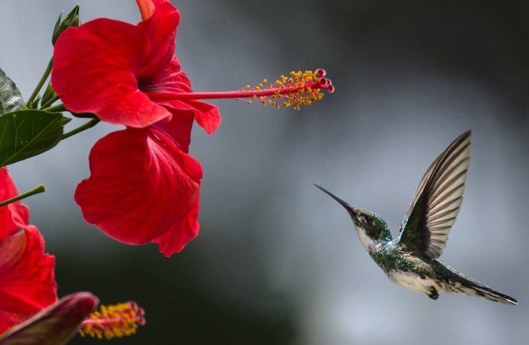 طائر في عنقه