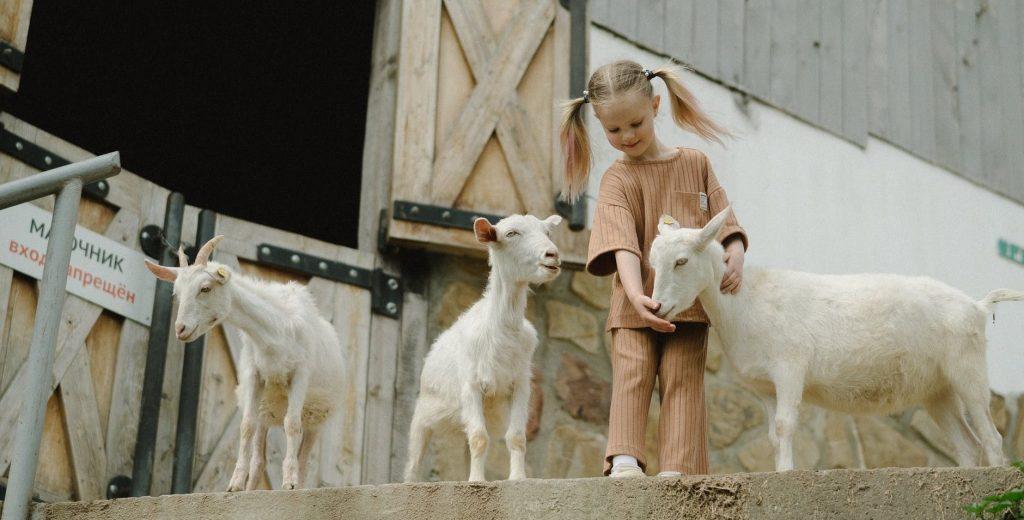 girl in white long sleeve shirt standing beside white horse