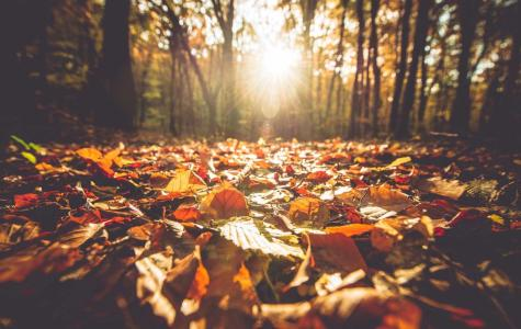 Fall Break Idea Greeted With Mixed Opinions