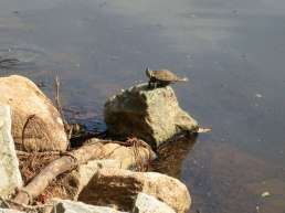 a turtle doing yoga,
