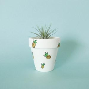 Pineapple pot with air plant