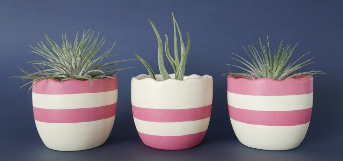 Air plants in eggshell pots